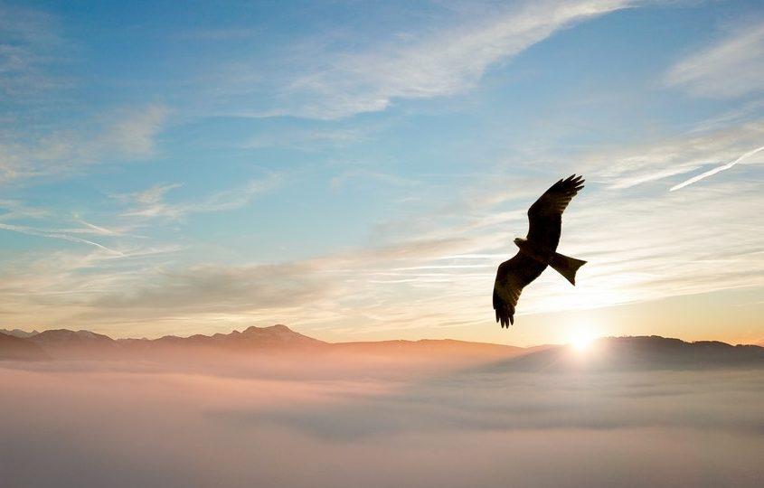 Imagini pentru libertate